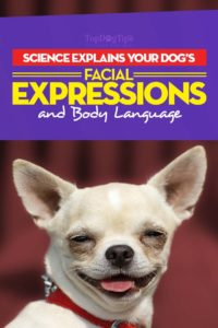 Dog Facial Expressions and Body Language Explained