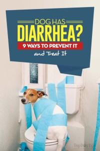 Dog Has Diarrhea Tips