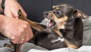 Canine Fear and Aggression Can Be Genetic
