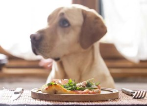 Is pizza safe for dogs