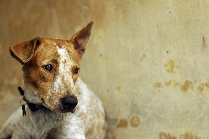 Many Dogs Left Tied Up During Hurricane Irma – Owners Will Be Prosecuted