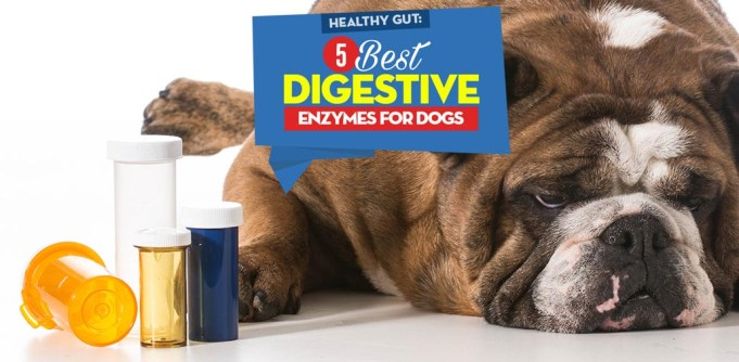 The 5 Best Digestive Enzymes for Dogs