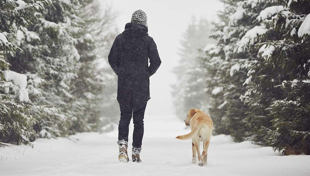 Tips for Walking Dogs In Winter