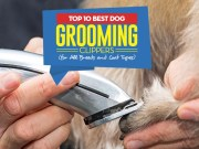 Top 10 Best Dog Grooming Clippers For All Breeds and Coat Types
