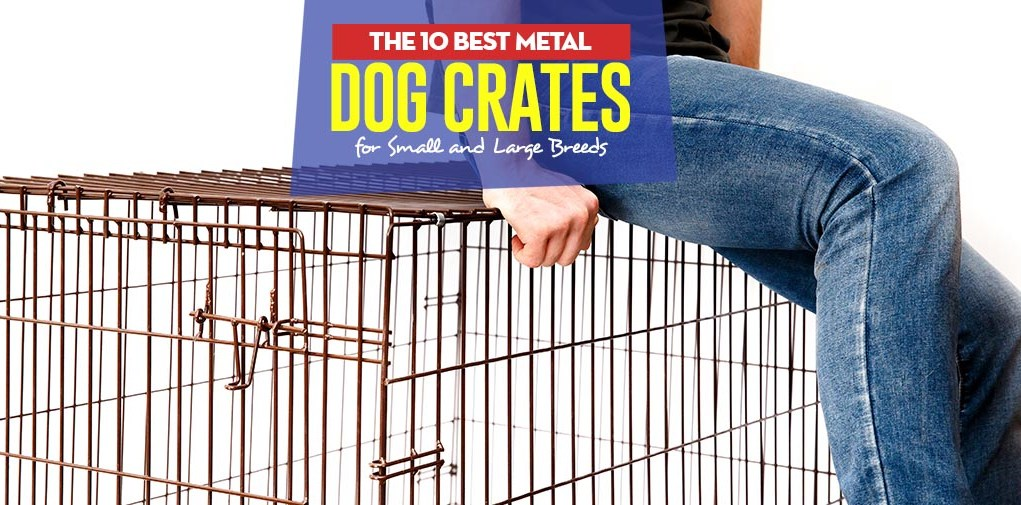 Top 10 Best Metal Dog Crates for Small and Large Breeds