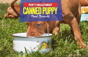 Top 7 Best Canned Puppy Foods