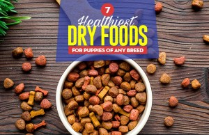 Top 7 Best Dry Foods for Puppies of Any Breed