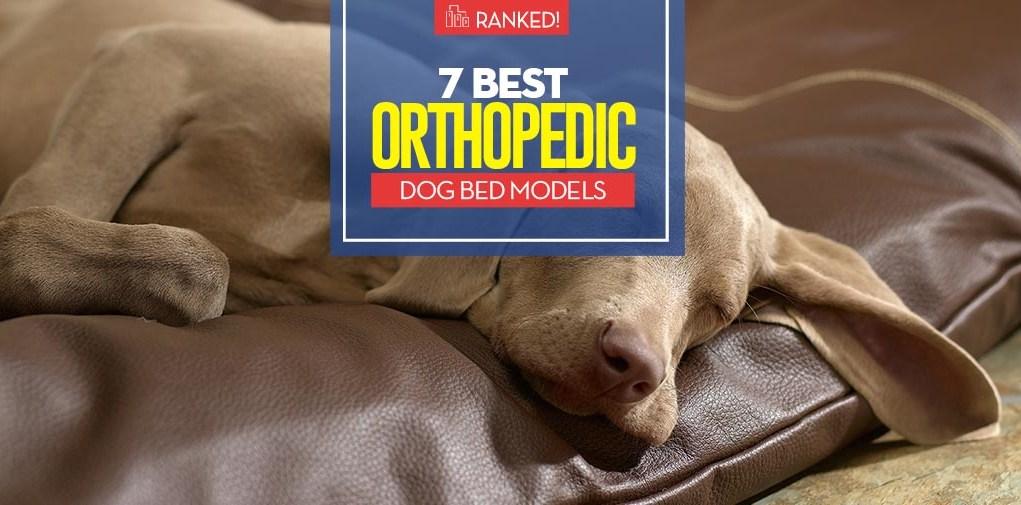 Top 7 Best Orthopedic Dog Bed Models