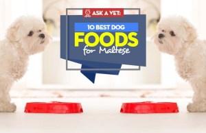 Top Best Dog Food for Maltese