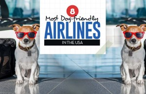 Top Most Dog Friendly Airlines