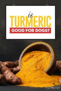 Turmeric for Dogs 101 - Can Our Dogs Take It