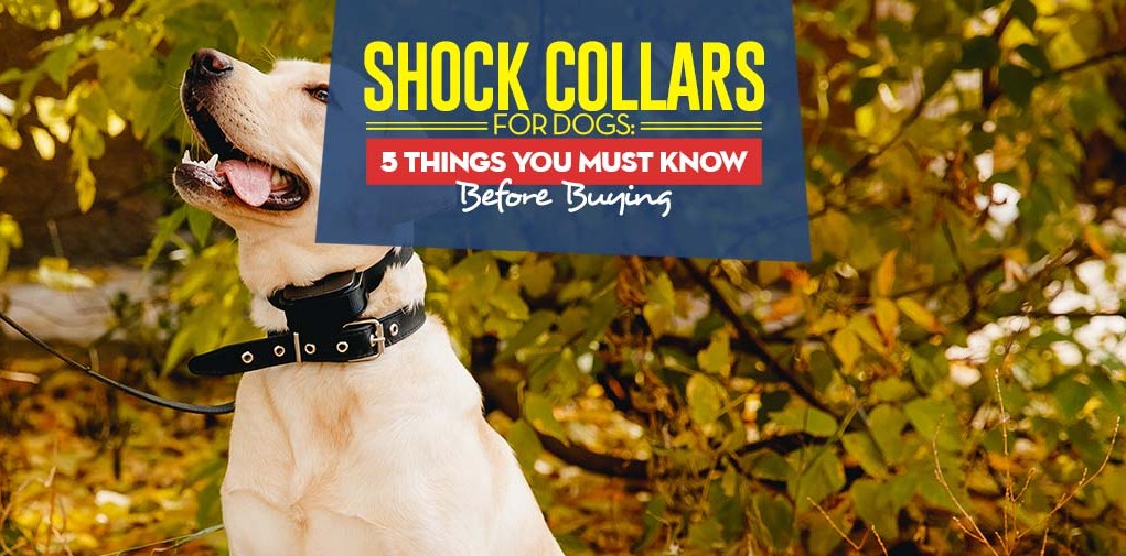 What Are Shock Collar for Dogs