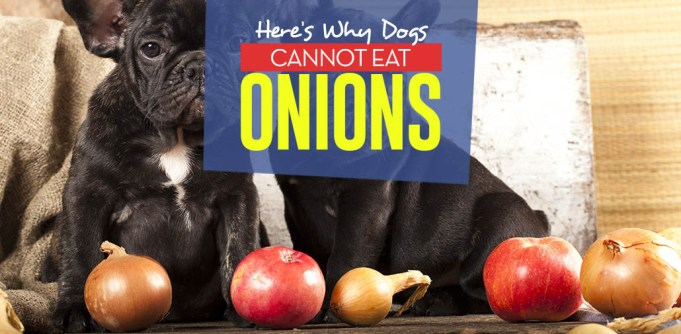 Whats the Reason Dogs Cannot Eat Onions