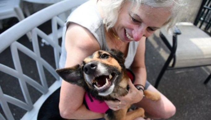 Dog Lost In Florida Turns Up In New York – Help Needed to Get Her Back Home