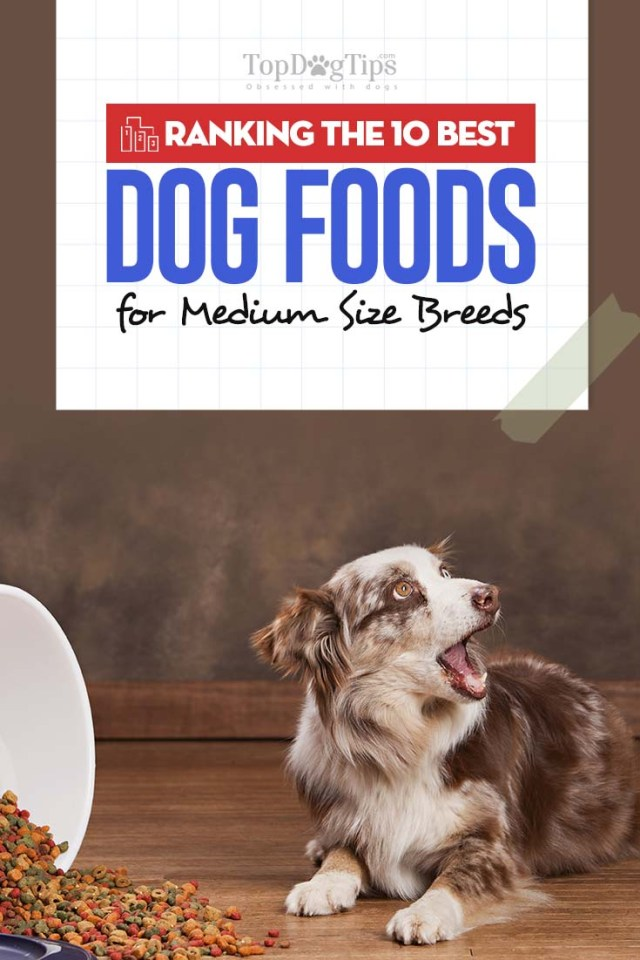 10 Best Dog Foods for Medium Dogs