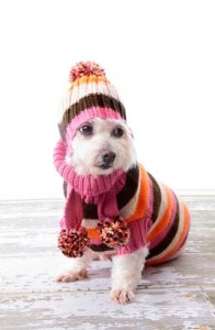 A cold dog in winter clothing