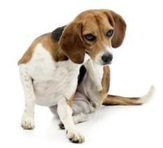 Allergy Meds For Dogs