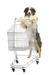 Best Black Friday Deals on Dog Supplies