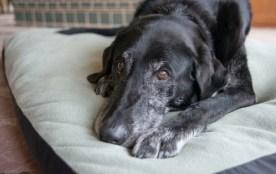 Best Dog Bed Warmer