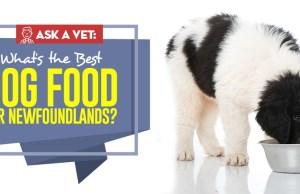 Best Dog Food for Newfoundland