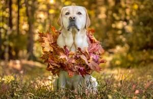 Best Thanksgiving Dog Collars