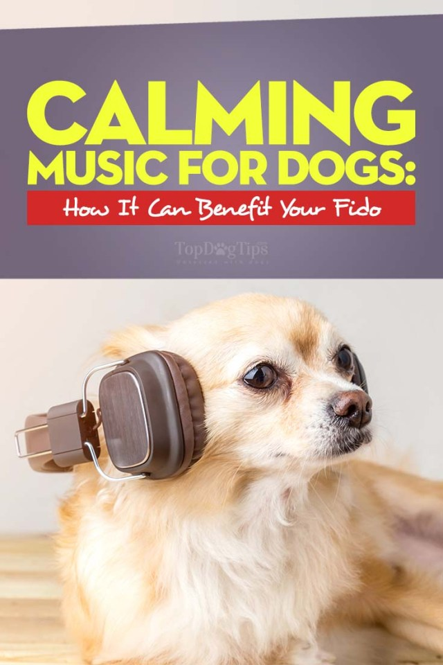 Calming Music for Dogs – What Is It and How Can It Benefit Your Dog
