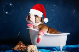 Dog bathing in winter
