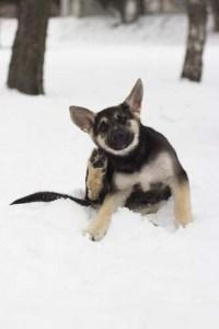Dog fleas winter