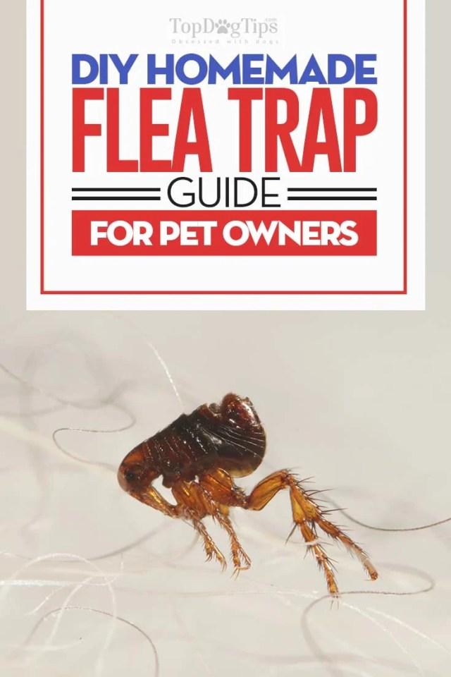 Homemade Flea Trap - The DIY Guide