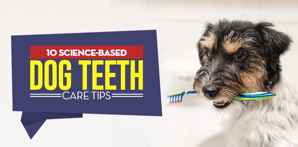 Science-Based Dog Teeth Care Tips