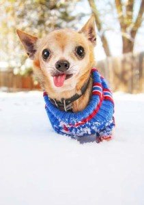 Small dog in cold winter weather