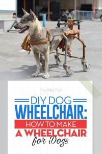 The DIY Dog Wheelchair Guide