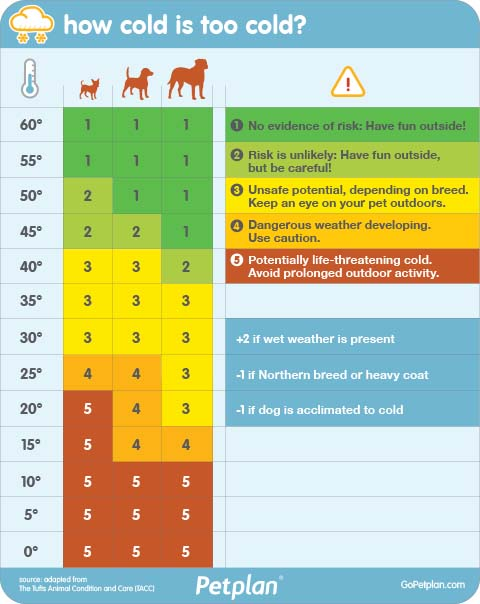 Too Cold for Dogs Chart