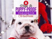 Top 8 Ways to Puppy-Proof Your Home for Christmas