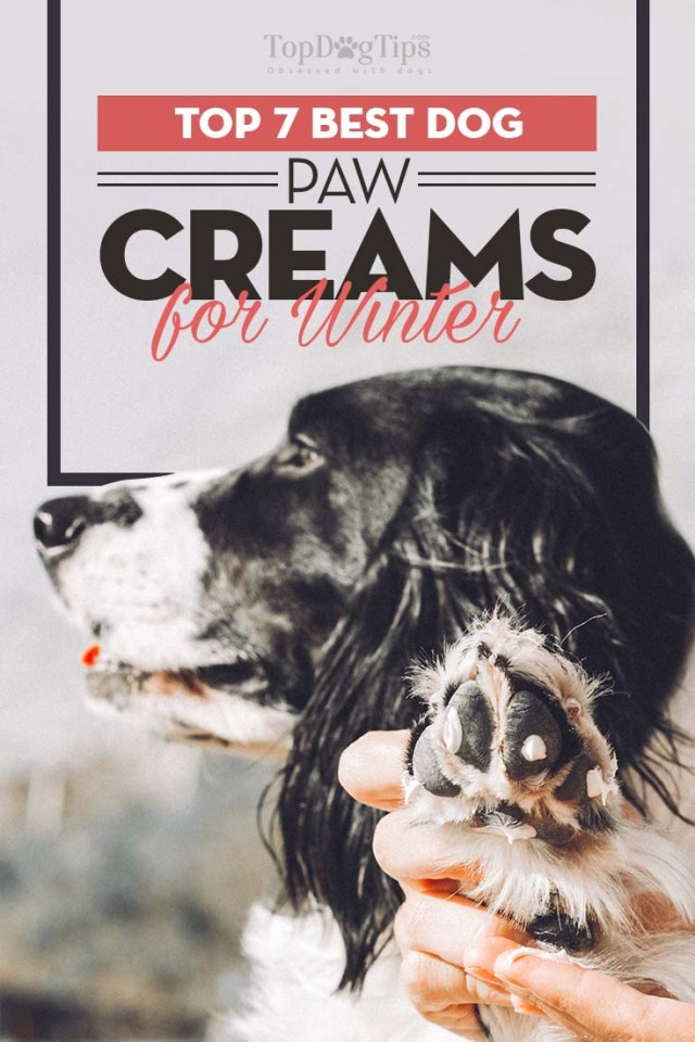 Top Rated Dog Paw Creams of 2020