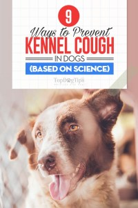 9 Ways to Deal With Kennel Cough in Dogs