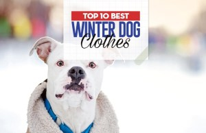 What Are the Best Winter Dog Clothes