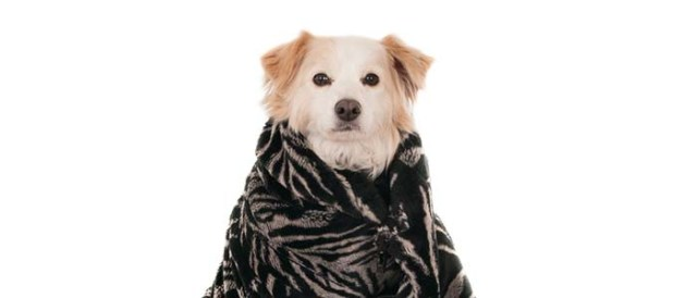 When do dogs need blankets in winter