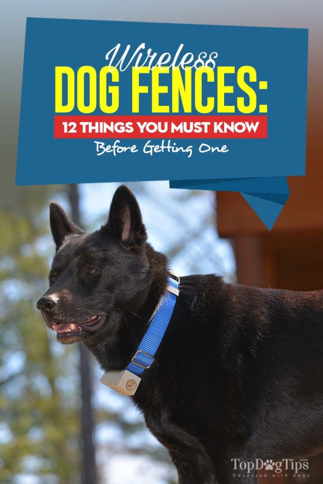 Wireless Dog Fence - 12 Things You Must Know Before Getting One