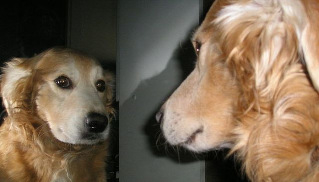 Dogs May Be More Self-Aware Than We Thought