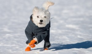 how to keep dogs warm in winter