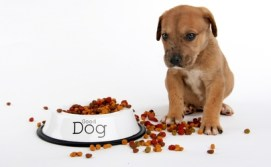 The best dry puppy food brands