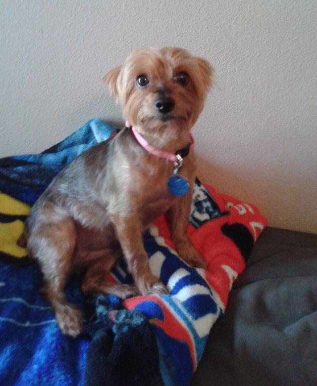 Woman Suffers Clinical Heartbreak After Dog's Death