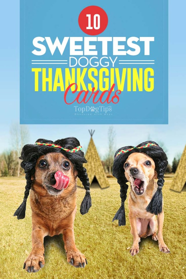 10 of the Cutest Dog Thanksgiving Cards