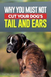 A Case Against Cutting Dogs Tails and Ears