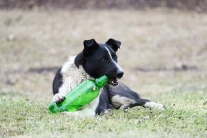 Alcohol for dogs