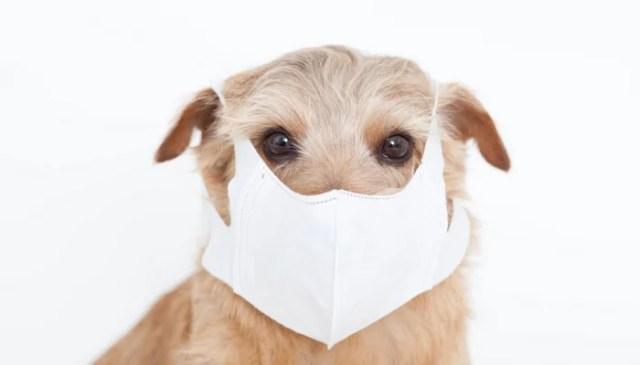 Dog Coughing
