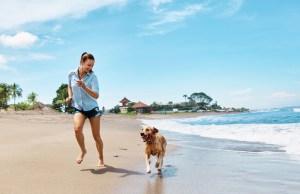 Dog Holiday Resort