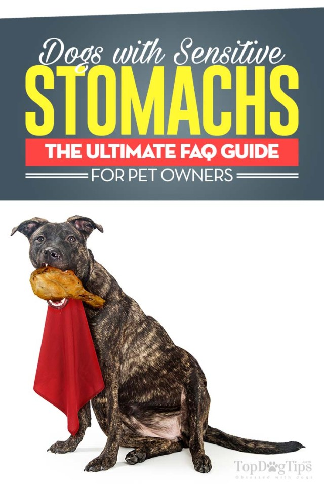 Dogs with Sensitive Stomachs FAQ
