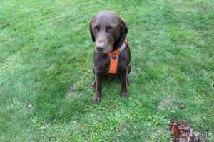 Embark Adventure Dog Harness Review